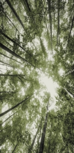 Merinos Belis Hali 22103 40-Green